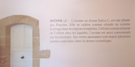definition-avoine